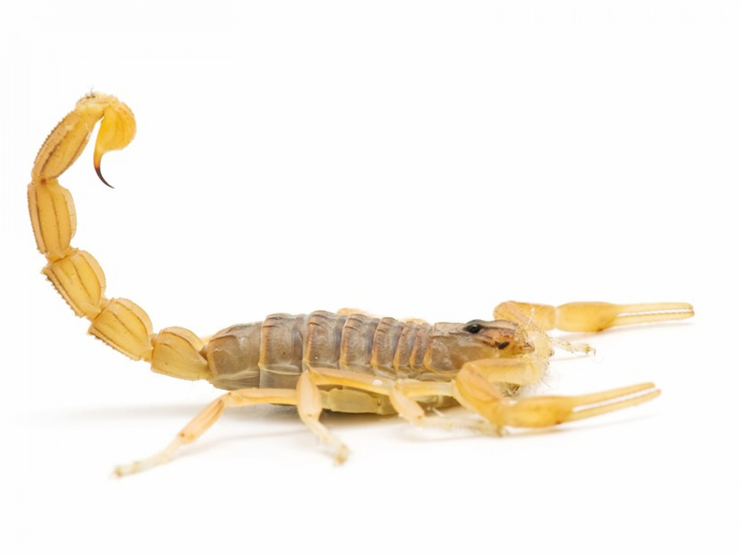 Resolve your residential scorpion problem